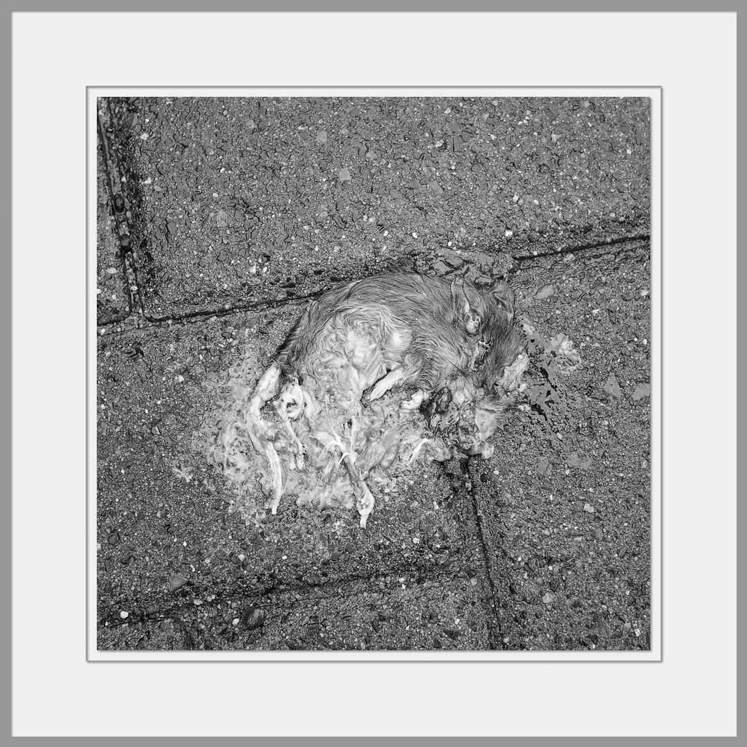 Tote Tiere Motiv 4
