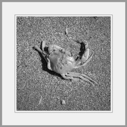 Tote Tiere Motiv 14