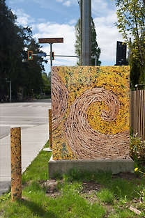 CANADA GOLDENROD + CANARY GRASS