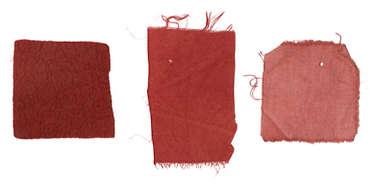 MADDER  (RUBIA TINCTORUM) - Dye Only