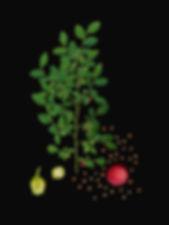 Huckelberry_2017_f1-web.jpg