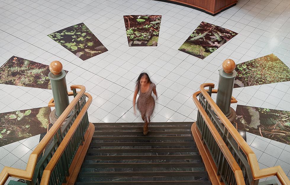 Laara Cerman - Forest Floor - Richmond Cultural Centre