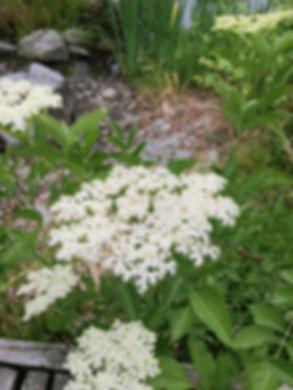 PlantWalk-IMG_0708 1_w1.jpg