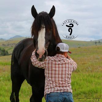 Horse Hugs!