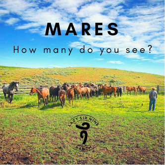 How Many Mares Do You See?