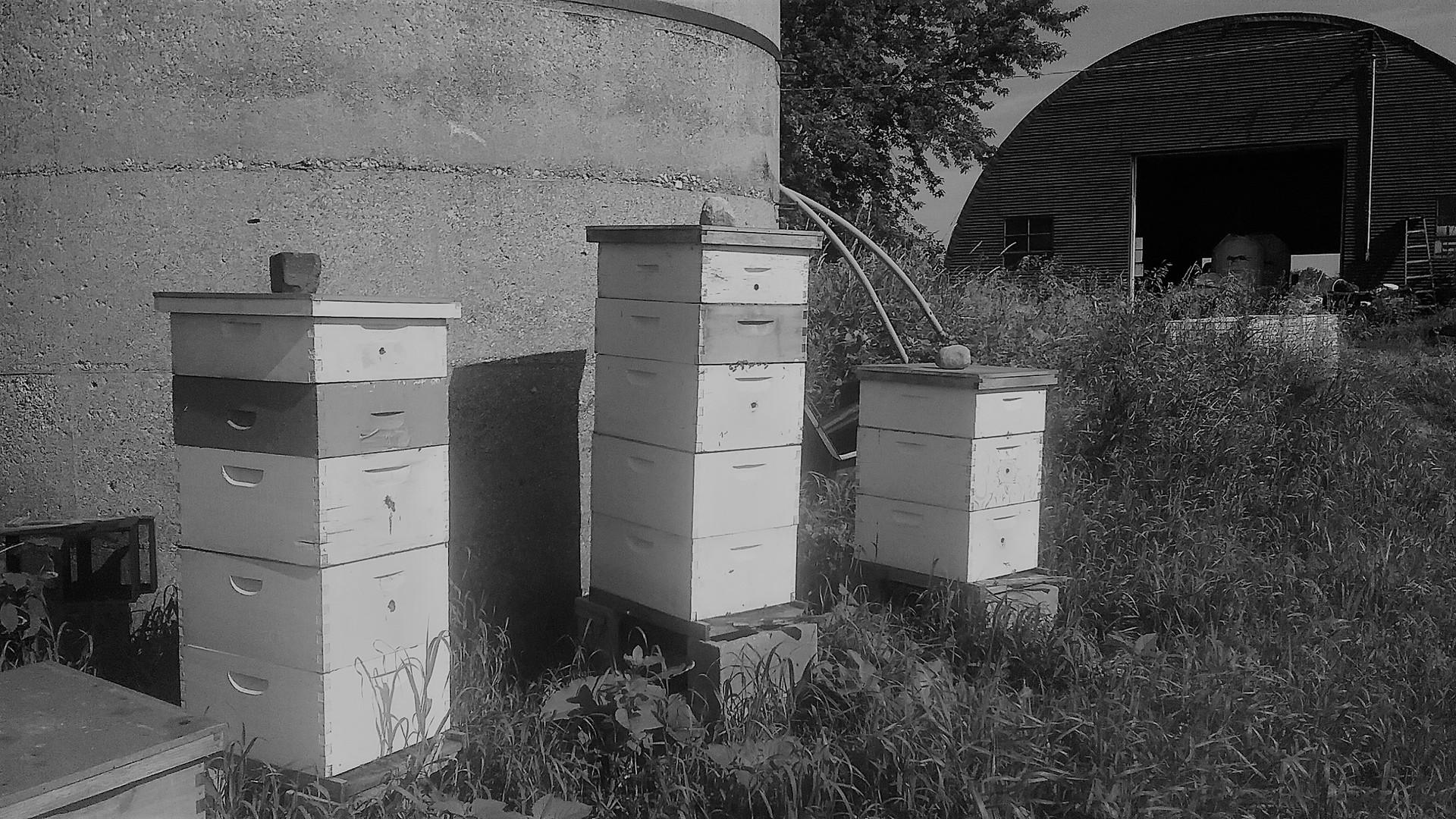 2018 bee hives.jpg