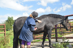 Horse clipping