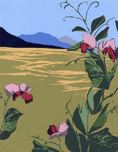 Montana Sweet Peas Print