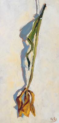 Single Dried Tulip
