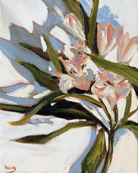 Pink Lily Study