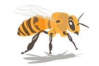 Vector Bee.png