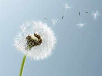 Töltsük meg a szívünket a beteljesedés reményével