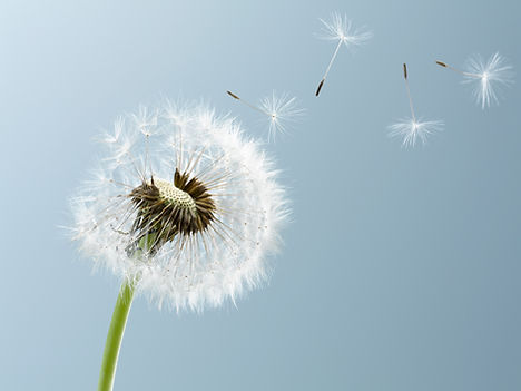 Mindfulness and meditation shirley scott