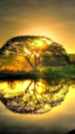 Acacia sunset2.jpg