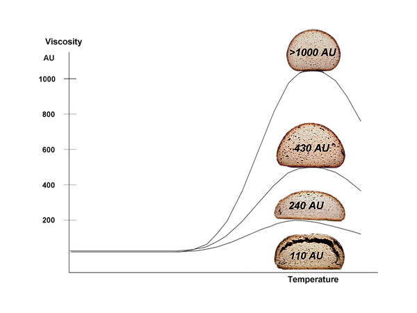 Amylograph E Diagram-with bread.png