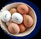a023_huevo_la_calera.png