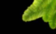 AdobeStock_200647674%20%5BConverted%5D-0