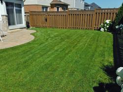 Monica's Lawn