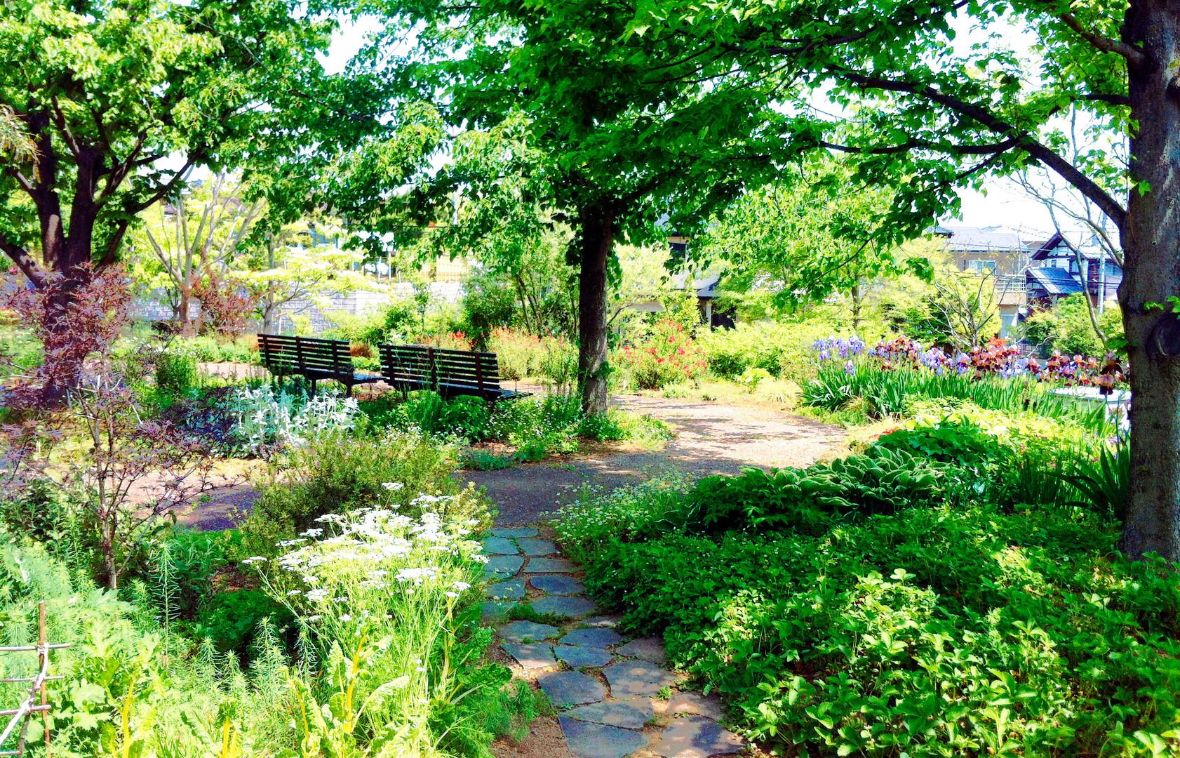 ガーデン(薬香草園)_トンマナ.jpg