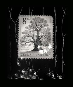 01 Family Tree