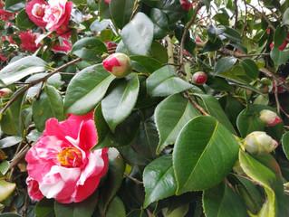 How Do You Blossom?