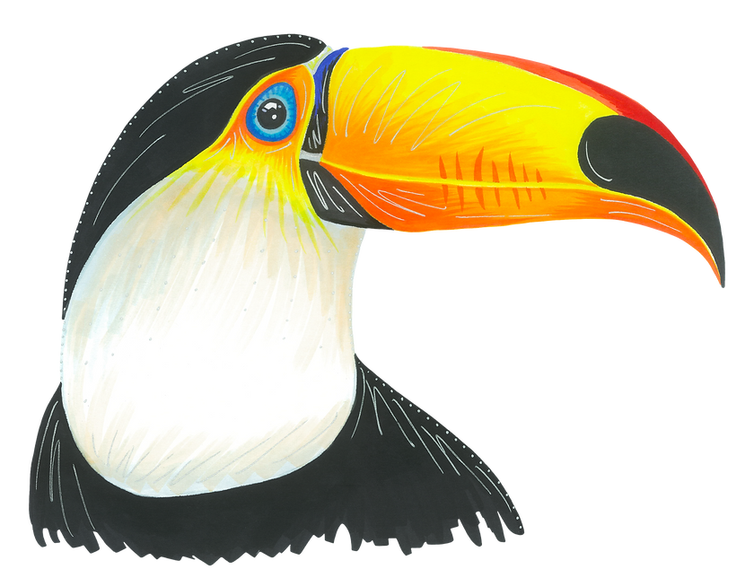 Toucan_edited.png
