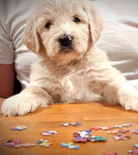 Puppy%20doing%20puzzle_edited.jpg