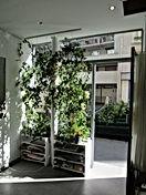 atelier végétalisé.jpg