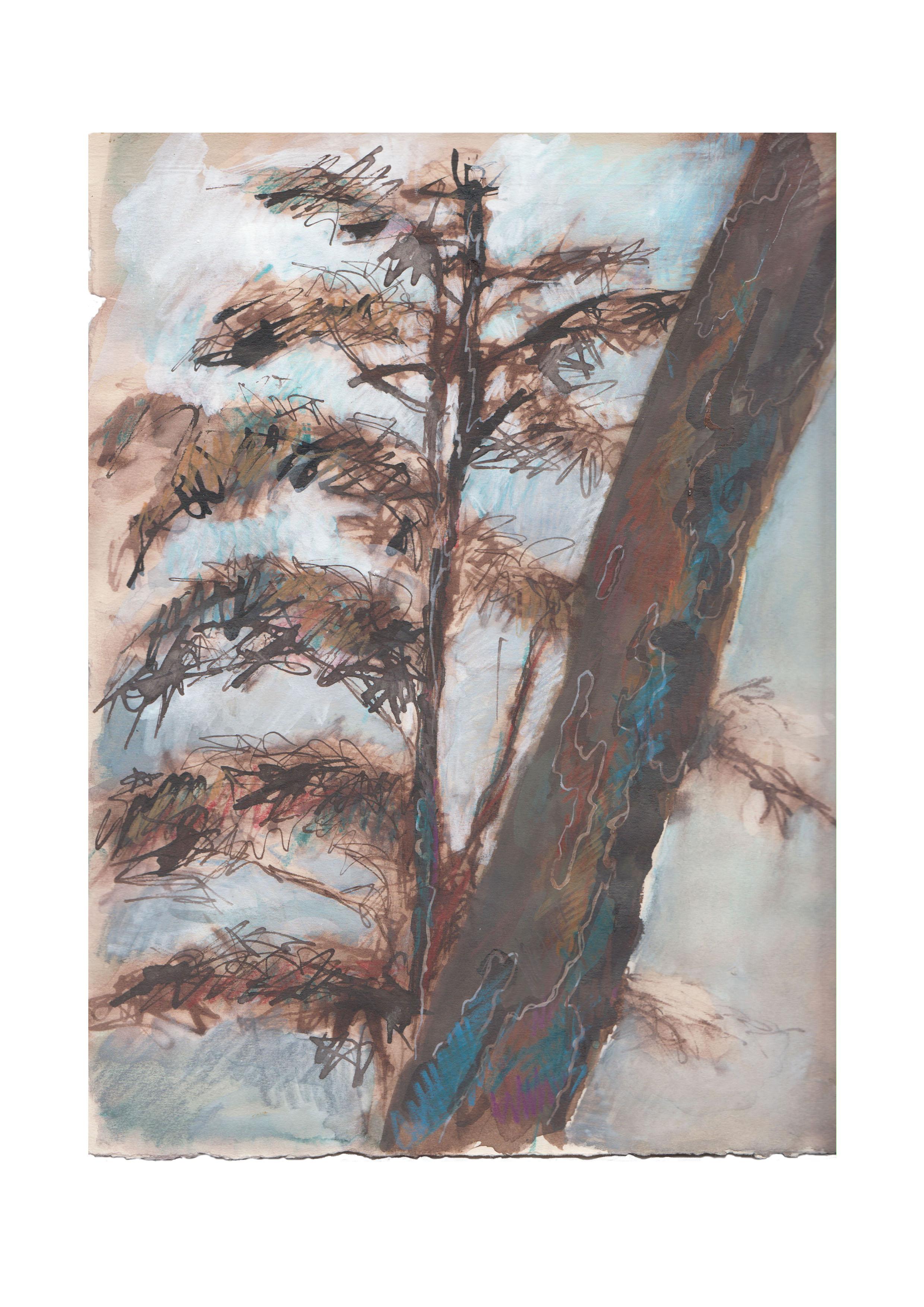 arbre Vincennes