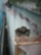 川崎市 宮前区 屋根工事 雨樋工事 施工中 軒樋 解体