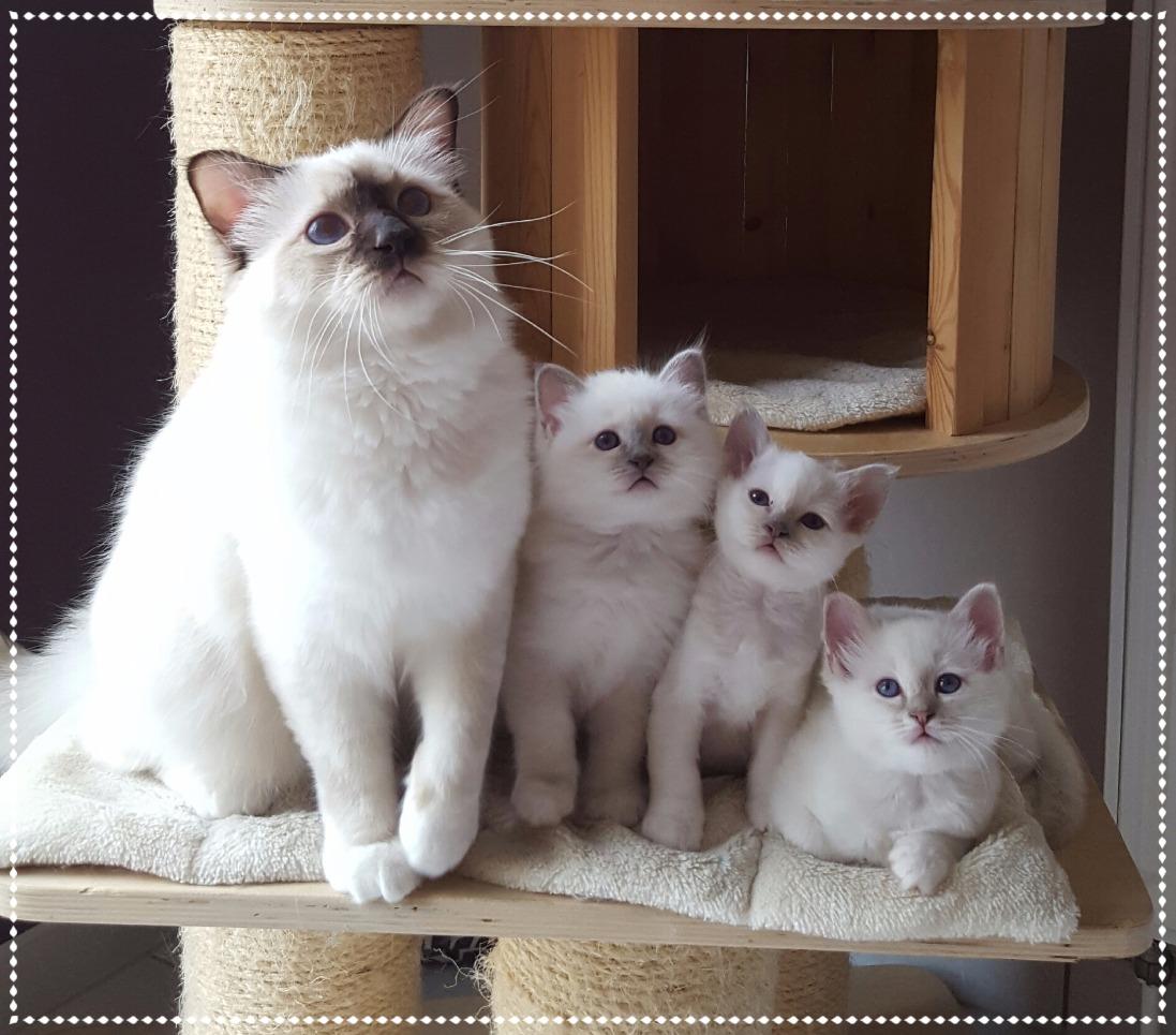 Merlin & ses 2 frères et sa soeur