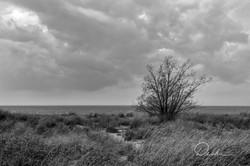Lone Tree, Presque Isle