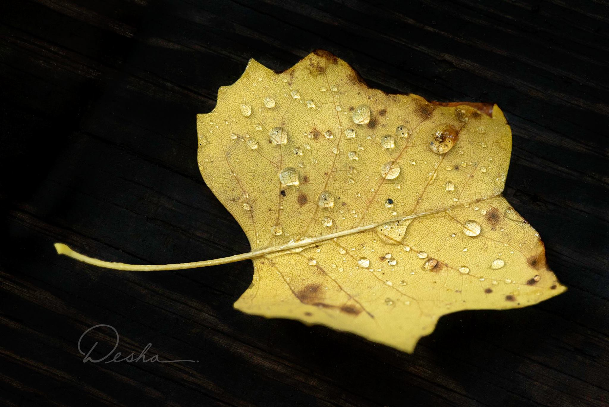 Water Droplets on Yellow Leaf