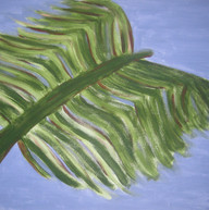 0013 Butterfly Palm