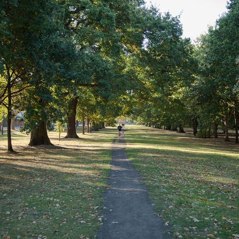 Veteran Trees and Heritage Tree Avenues