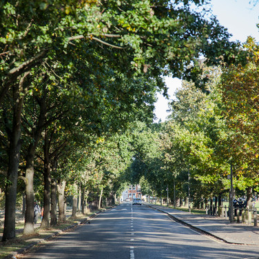 Veteran Trees and Heritage Tree Avenues