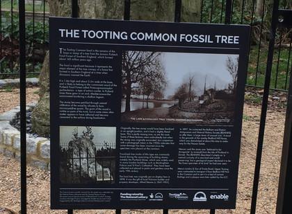 Fossil Tree History Panel