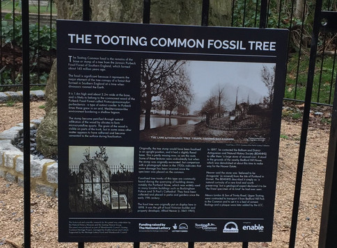 Fossil Tree History Panel