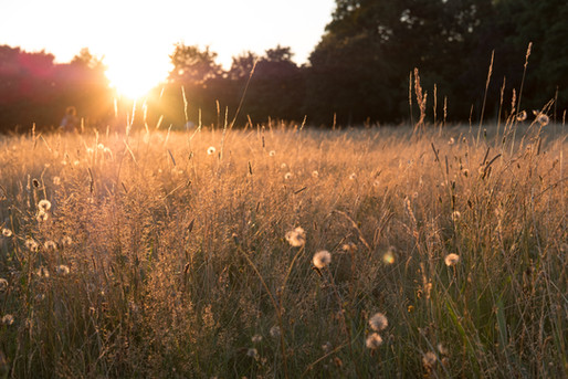 Acid Grassland Restoration