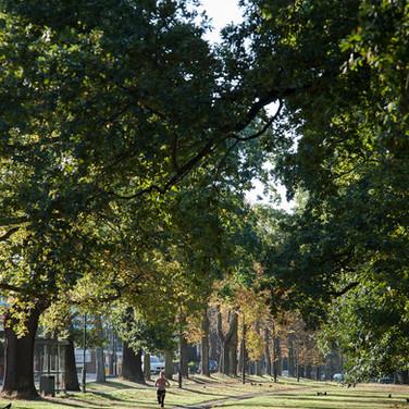 Veteran Trees & Heritage Tree Avenues