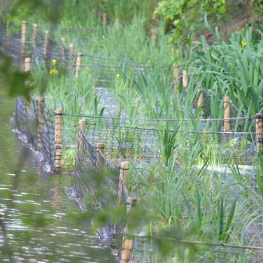 Tooting Bec Common Lake Restoration