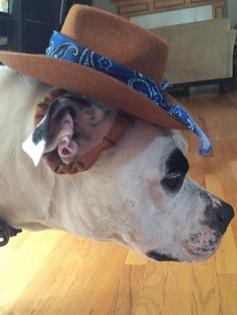Cowboy Zigs