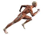 Energie et récupération musculaire