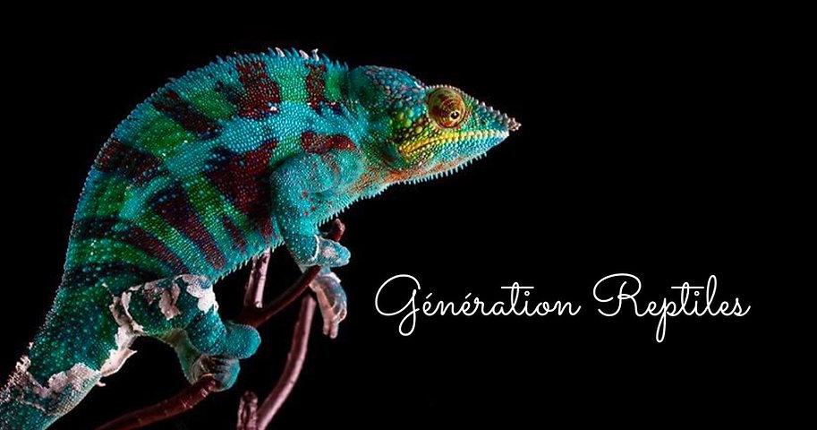 generation reptile 21.jpg