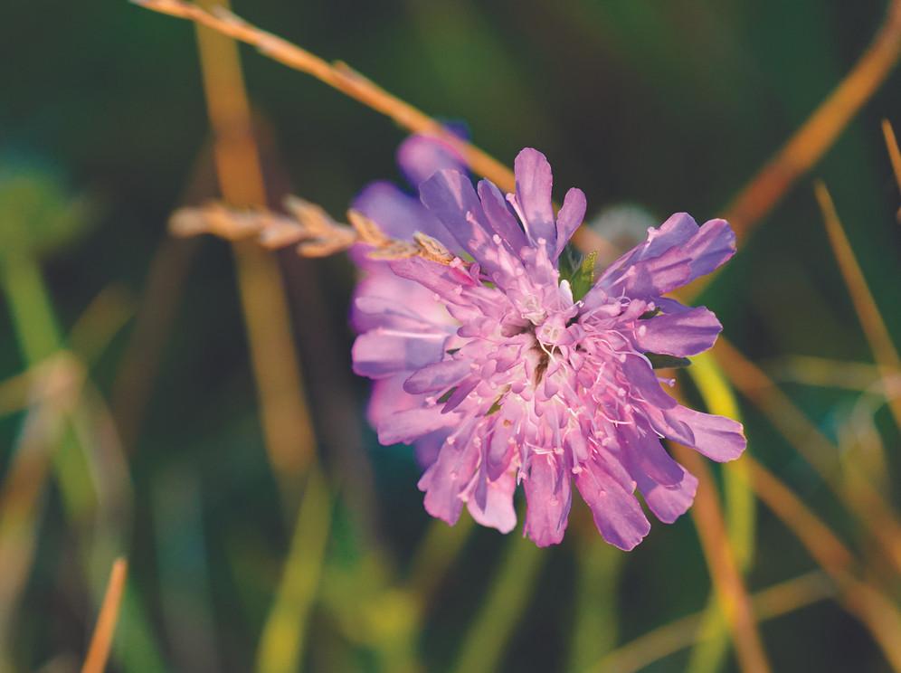 solarfarmflower.jpg