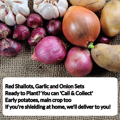 red shallots advert.jpg