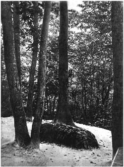 L. N. Tolstoy's grave