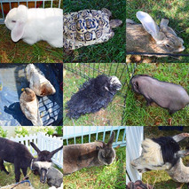 How many ways to show our love of animal