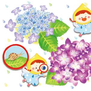 紫陽花としずくの妖精