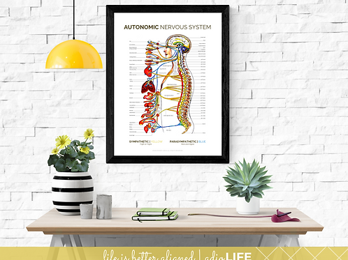 ANS CHART - Chiropractic Poster (White)